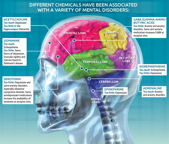 Brain Chemicals Infographic